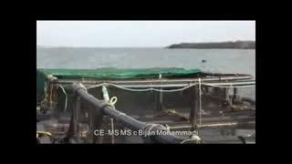 Fish cage culture in India/پرورش ماهى در کشور هندوستان