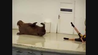 ورزش حیوانات خنده دار