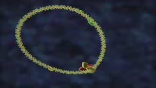 چرخه HIV
