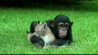 دوستی های باورنکردنی بین حیوانات