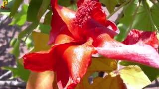 کمیاب ترین گل ها در جهان