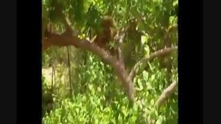 میمون شیطون