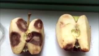 تاثیر کلمات مثبت و منفی  - آزمایش روی سیب