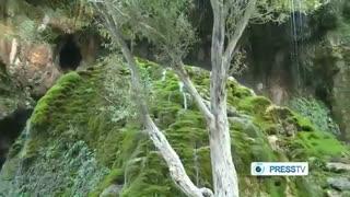 گزارش press tv  از جنگلهای قره داغ یا ارسباران قسمت 2 Arasbaran jungle