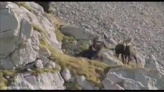 شکار در طبیعت