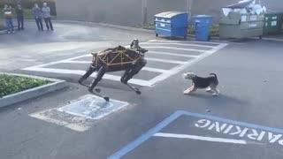 همبازی شدن سگ ربات گوگل با سگ واقعی