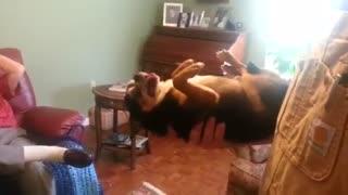 سگی که از داماد خانه متنفر است و در آغوش او خودش را به مردن میزند.