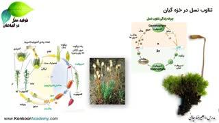 تولید مثل در گیاهان - چرخه تناوب نسل خزه - علیرضا سیاحی