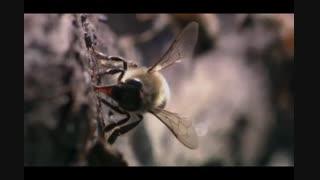 زنبور عسل در کلام خداوند