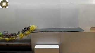 همکاری ربات های سوسکی برای بالا رفتن از پله