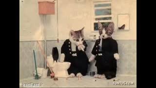 زندگی گربه ها-خیلی خنده داره-دیدینیه-دیدن الزامیه