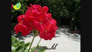 باغ ویلای بسیار زیبا و امن در ویلادشت ملارد
