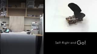ساخت روبات JumpRoACH با الهام از عملکرد سوسک