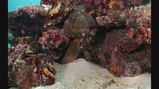 طبیعت دریا / کیفیت 4k
