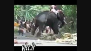 فیل عصبانی