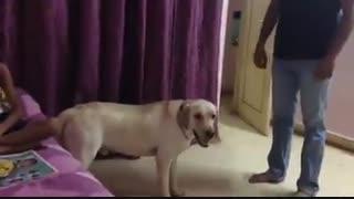 وفای سگ را در این کلیپ مشاهده کنید
