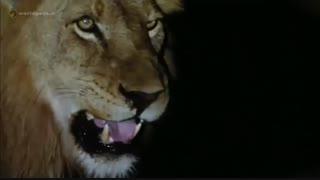 گلچینی از صحنه های مبارزه و شکار حیات وحش - مجله دنیای حیوانات
