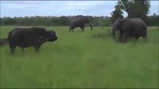 حمله های وحشتناک فیل HD