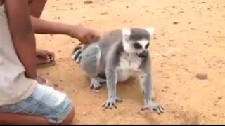 درخواست عجیب این حیوان از بچه ها