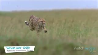 top 10 : سریع ترین حیوانات