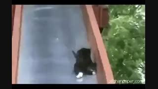 سرسره بازی کردن گربه خنده دار