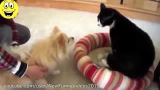 کلیپ بامزه ی ترسیدن سگ ها از گربه ها !!!