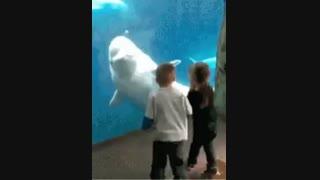 دلفین زرنگ و شیطون