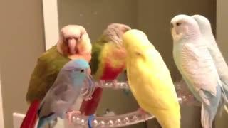 پرندگان زیبا ...!!!