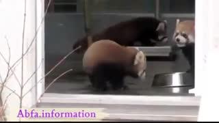 کلیپ طنز حیوانات