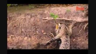 شکار شکارچی