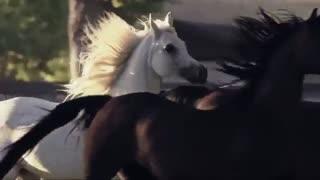 اسبهای زیبا
