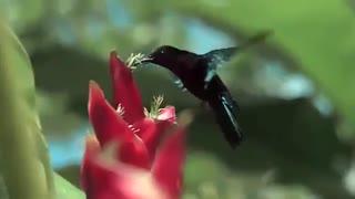 کلیپ شگفت انگیز از طبیعت