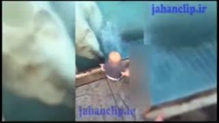خرس قطبی در یک قدمی نینی قنداق
