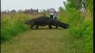 تمساح غول پیکری که شبیه دایناسور است