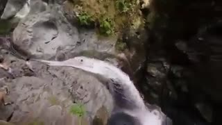 پرش در رودخانه در جنگل | معرفی ورزش های ابی جدید و پارک های ابی
