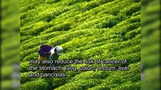 10 سوپر ماده غذایی برای نابود کردن سلول های سرطانی(2)