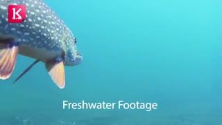 اگر DJI مالک هوا است، این ربات زیر آبی، مالک دریاست