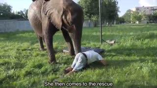 نمایش آکروباتیک فیل وفیلبان-3