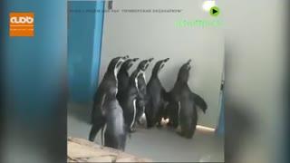 سر کار گذاشتن پنگوئنها با نور
